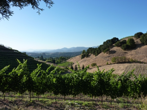 The Porter Family vineyards are at 600 ft.